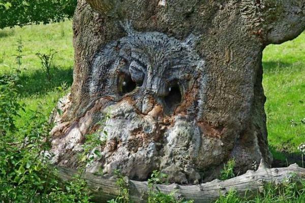 这些树大概是成精了:神奇大自然造就千姿百态