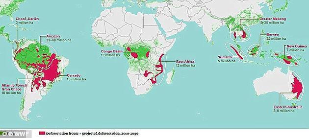 世界自然基金会此前警告称,截至2030年,预计全球将有1.7亿公顷的森林消失,相当于法国、德国、西班牙、葡萄牙面积的总和。