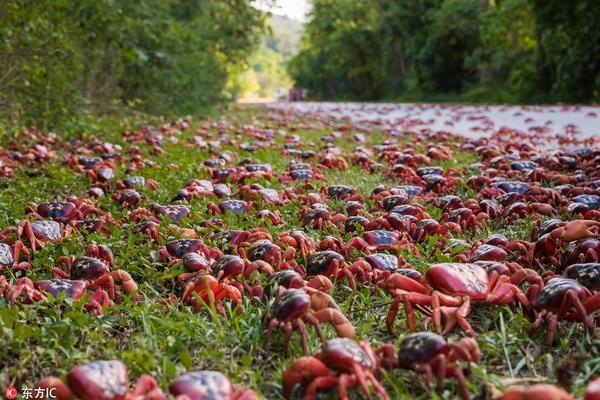 澳圣诞岛迎来螃蟹大迁徙 数百万只红蟹出动横行霸道