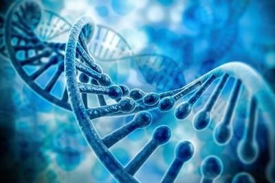 """""""基因剪刀""""改造出三眼蚊子:控制蚊媒传播疾病"""