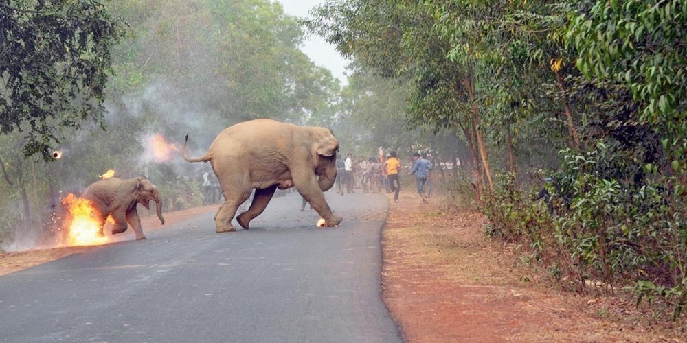印度野生动物摄影大赛获奖作品