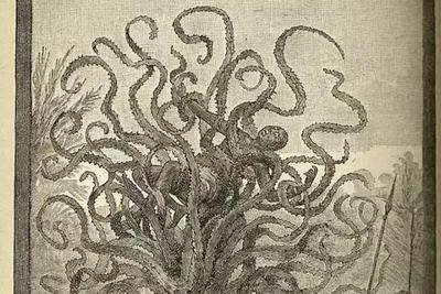 食人植物:人类幻想出来的梦魇