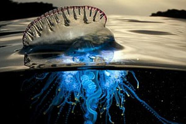 《蓝色星球2》的背后花絮:摄影师被水母蛰到用尿液止痛