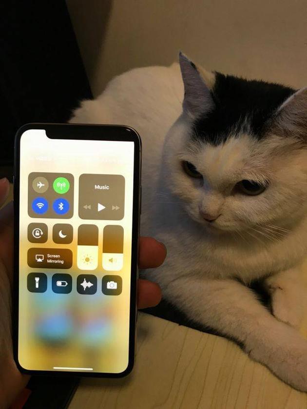 qdruid表示:这台iPhone X的刘海方向跟他家猫的刚好反过来