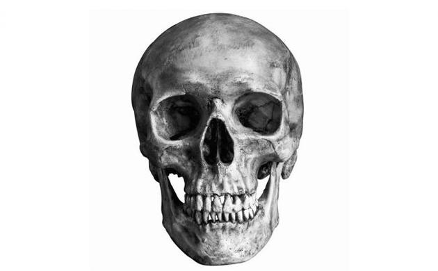一项最新研讨显现,黄金比例存正在于人类头骨中,但是剖解教家以为那是流言蜚语。