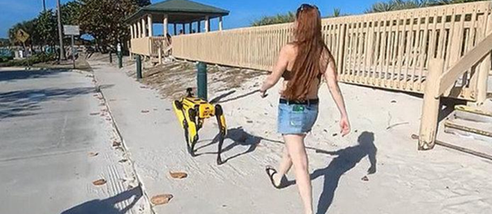 """波士顿动力一只48.8万,美女沙滩遛""""狗"""",网友直呼:壕!"""