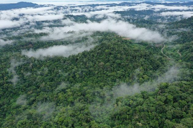 灭绝恐龙的小行星撞击或许造就今天的亚马逊雨林