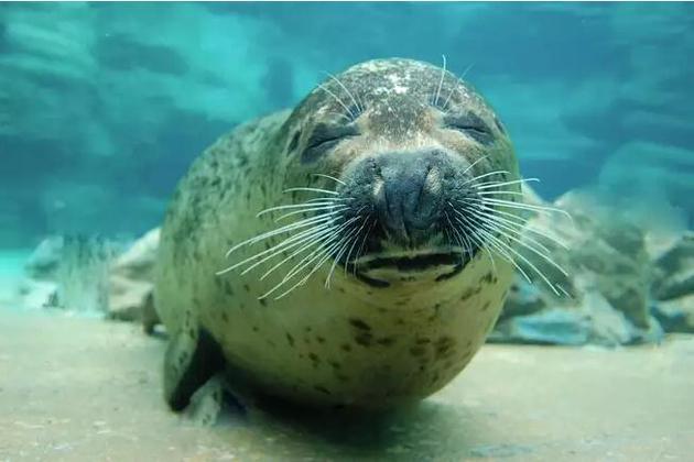 绝大多数海洋哺乳动物的重量都处于略高于500千克的水平——与海豹差不多。