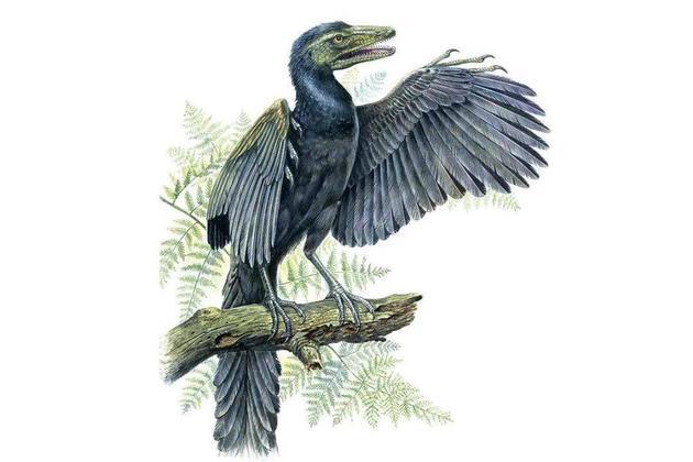 研究破解早白垩世鸟类繁殖系统之谜
