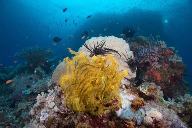 珊瑚礁周围的鱼类