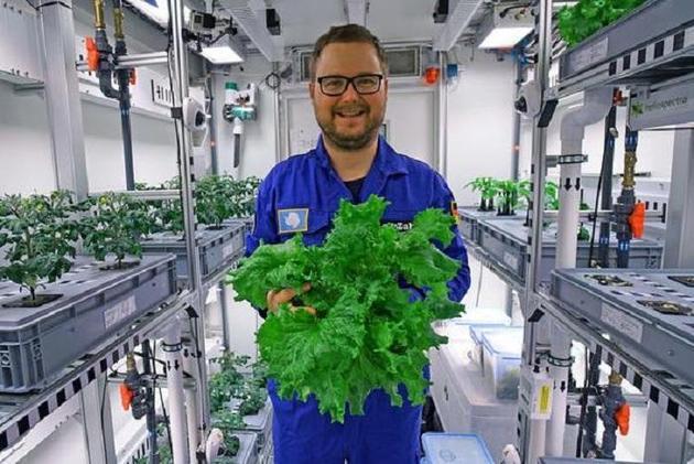 南极温室收获首批新鲜蔬菜:无土壤无自然光照