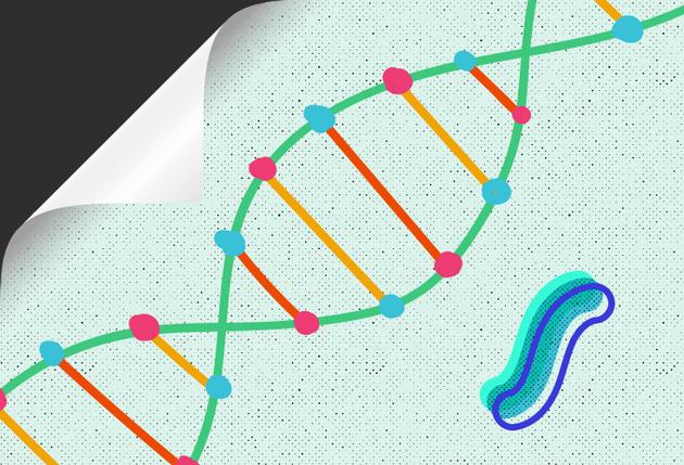 """在经典遗传学中,""""基因型""""(个体携带并可传递给后代的一组基因)和""""表型""""(生物体短暂拥有的环境和经验印记,但这些特征无法传递给后代)之间有着根本区别。"""