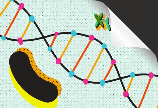 一些母体和父体效应似乎是作为帮助后代在最可能遇到的环境中取得优势的手段演化出来的。