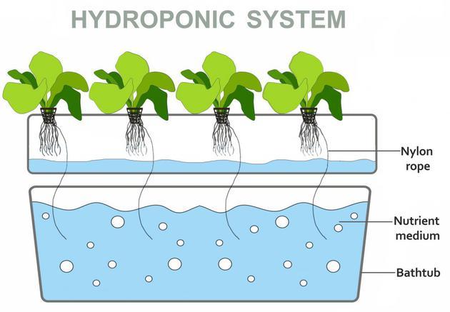 水耕栽培是什么?如何打造一个水培系统?
