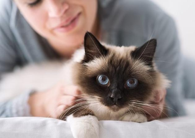 如何科学撸猫?它们只是容忍你而已 尊重最重要