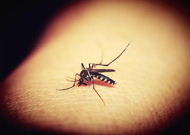 ▲城裏的月光把夢照亮,城裏的蚊子更愛叮人(圖片來源:Pixabay)