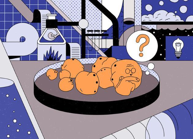 实验室培育的大脑类器官具有意识吗?