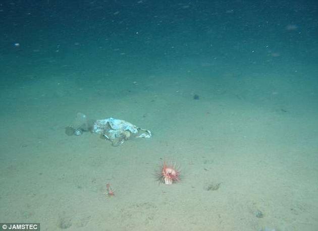在水深976米处发现的塑料袋,周围便有海洋生物在活动。