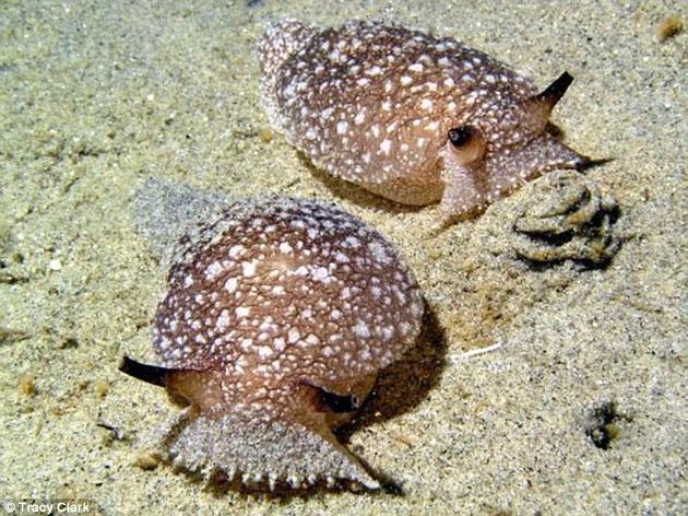 """""""虚拟海蛞蝓""""能像真实海蛞蝓一样感知饥饿和危险,或许将有助于深入了解生物体做出复杂决策的原因"""