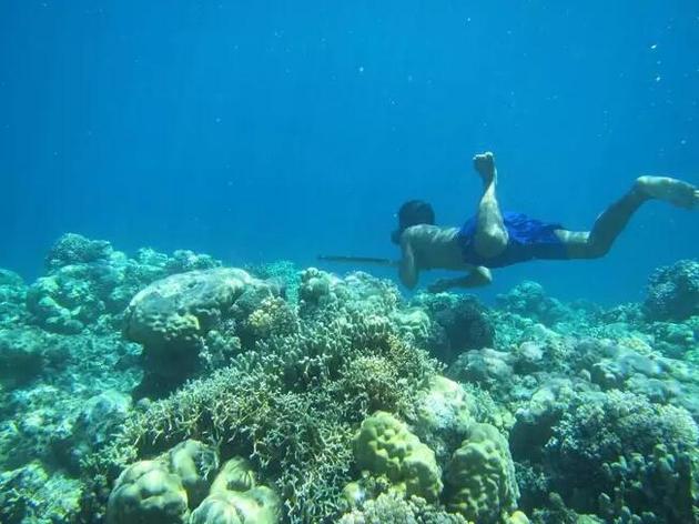 巴瑶人每天都要潜入水中,经常深入70多米深的水下捕捉鱼类和其他动物,一口气能在水中待上13分钟。