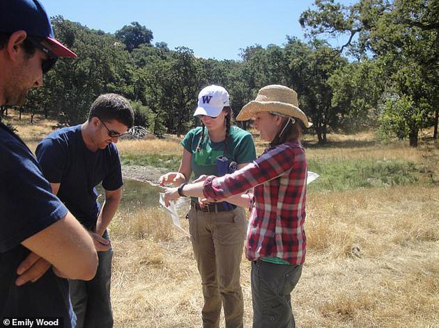 切尔西•伍德(图右)和她的研究团队在田野考察。包括伍德在内的约十二名主要的寄生虫生态学家在《生物保护》杂志上发表了一篇论文,提出针对寄生虫的全球保护计划。