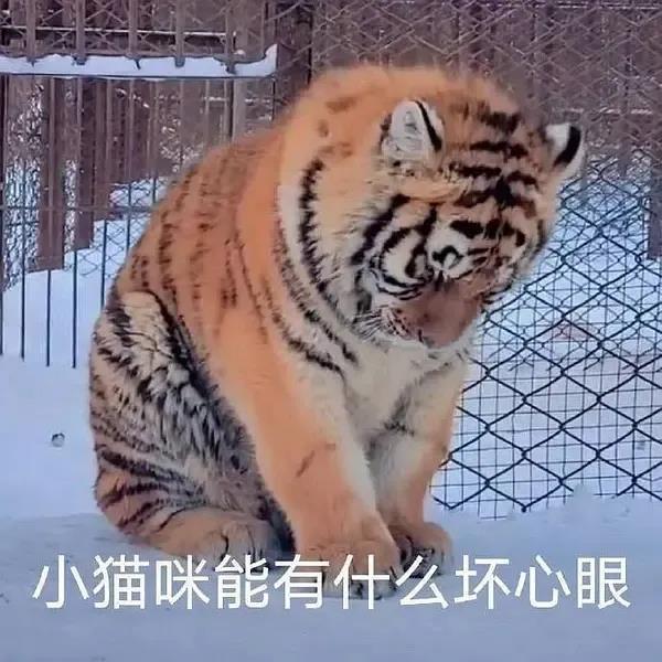 量子世界里有两只猫,一只是薛定谔的猫,另一只是......