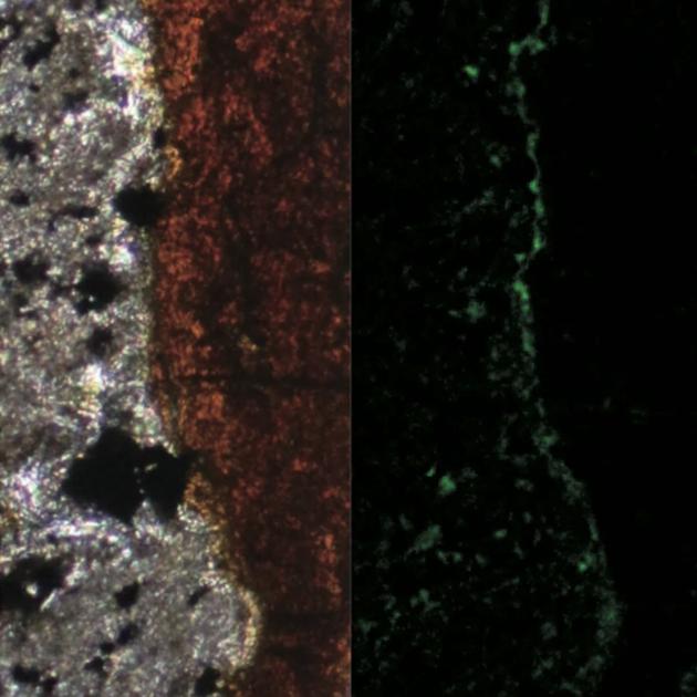 研究人員在南太平洋海底深處岩石裂縫發現微生物,這些單細胞微生物或許與火星潛在的生命十分接近。