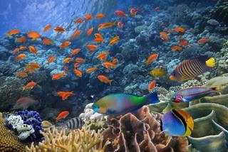 鱼类之间是如何交流的?方式丰富多样