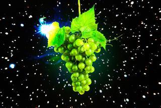 为了保证地球的红酒供应,科学家准备太空种葡萄