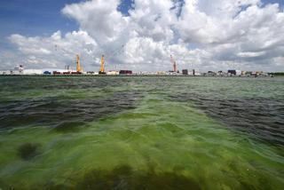 """美国近乎""""灾难性的""""污水泄露或危害海洋生物"""