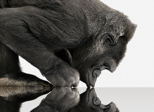 康宁第六代大猩猩玻璃 1米坠落15次仍无损