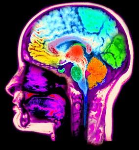 新研究发现,人类大脑形状的关键演化变化发生在大约10万到35000年前。