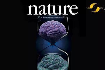 Nature重磅:复活死亡大脑