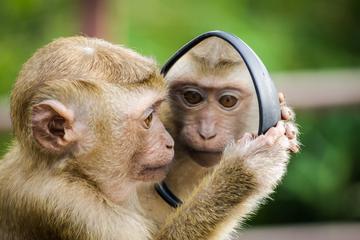"""用图像控制猴子大脑,哈佛是如何用算法""""造梦""""的?"""