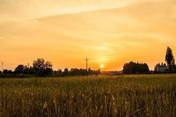 农村金融平台大量退出
