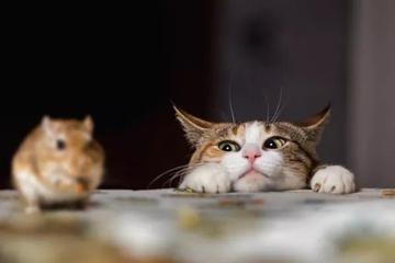 """深夜拦截""""杀手""""猫"""