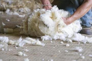 薅羊毛也有无间道