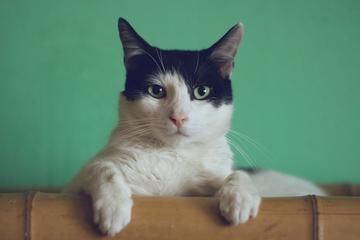 """喵星人统治互联网:今天,你看""""猫片""""了吗?"""