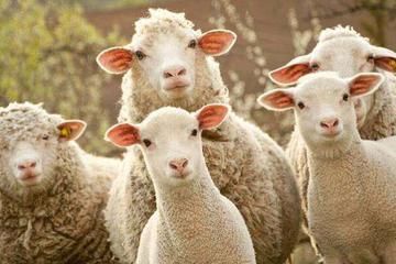 """把店主""""薅""""到关店的羊毛党"""