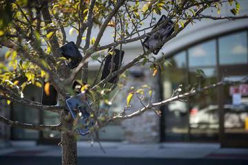 """外卖骑手""""困""""在系统里 亚马逊快递员的手机""""捆""""在树上"""