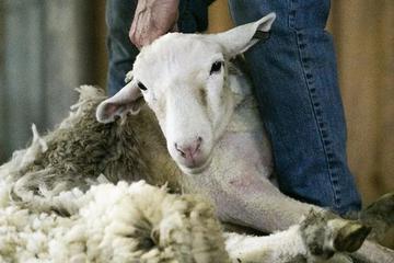 银行的羊毛不能薅