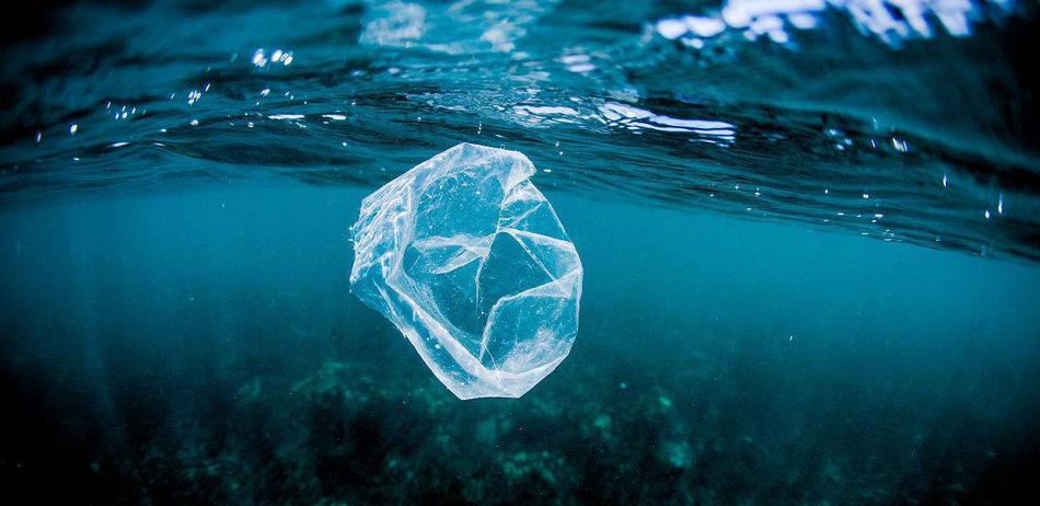 """心碎!海洋生物为何误吞塑料垃圾?人类也无""""万全之策"""""""