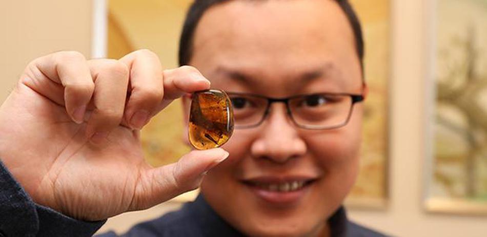 琥珀里又双叒叕有大发现!9900万年前的蛇宝宝