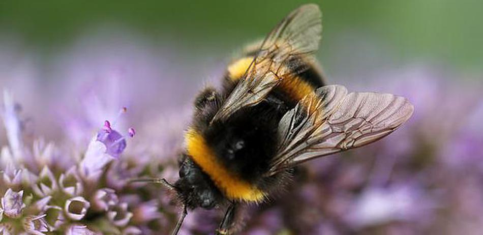 如果蜜蜂消失了,人类只能活4年?