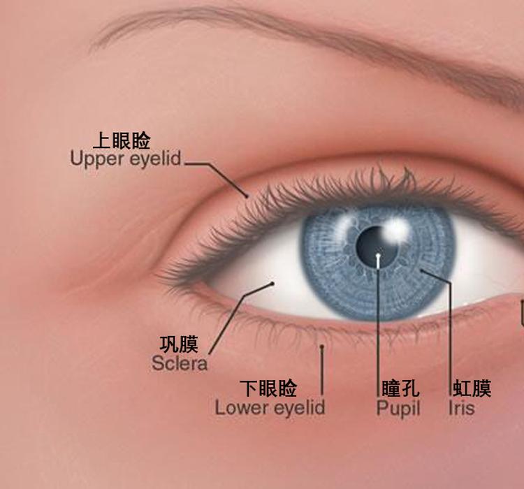 藏在你眼角的不只眼屎,还有祖先留下的第三层眼皮