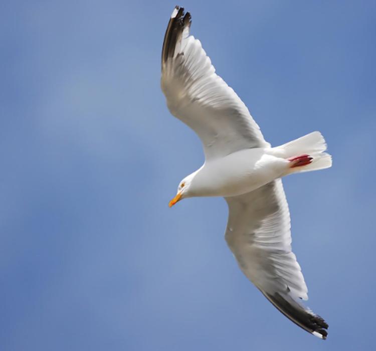 鸟类靠地磁场导航,竟然用到了量子力学?