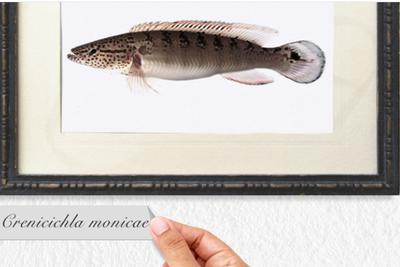 失落的物种:等待了一个世纪才被命名的鱼