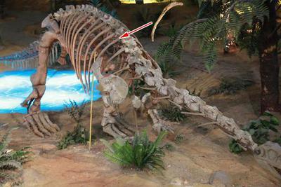 恐龙生病了!一根肋骨的奇妙故事