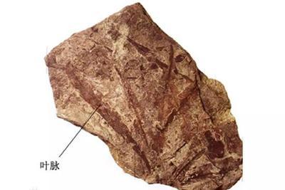 如果古生物学家送你块石头 里面可能藏着整个地球