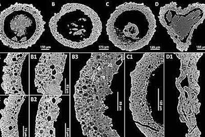 远古小怪蛋:长相奇特 身份成谜 显微CT探究真身